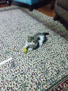 kedi yavrusu fotoğrafları