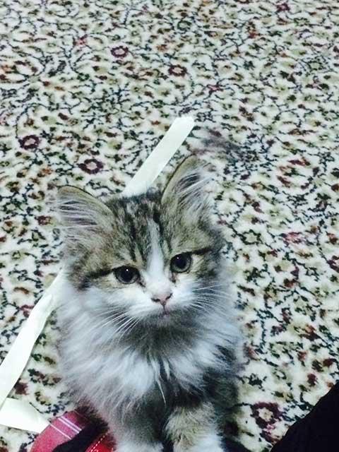 kedi-yavrusu.jpg