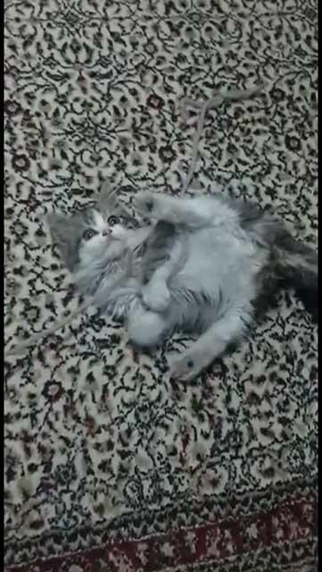 kitten-photography.jpg