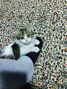 yavru kedi Badem