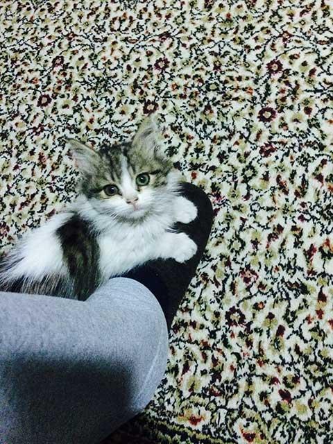 yavru-kedi-Badem.jpg