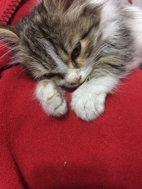 yavru-kedi-dinleniyor.jpg