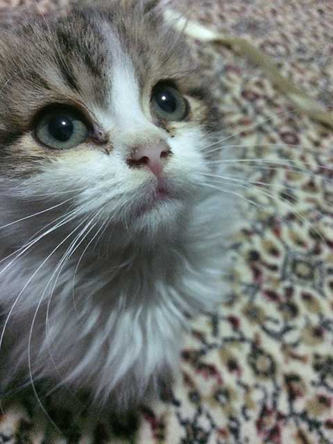 yavru-kedi-foto%C4%9Fraflar%C4%B1.jpg