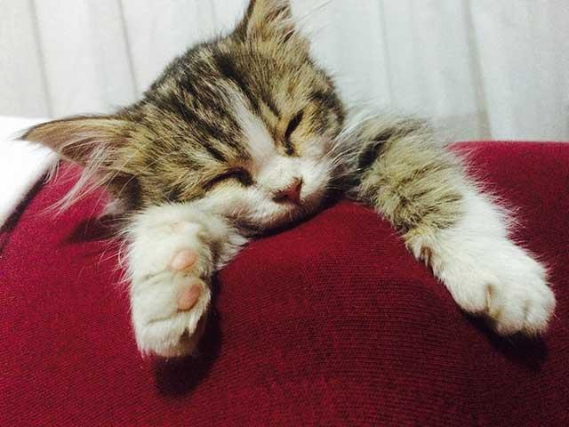 yavru-kedi-uyukluyor.jpg