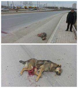 sokak köpeğinin ölümü